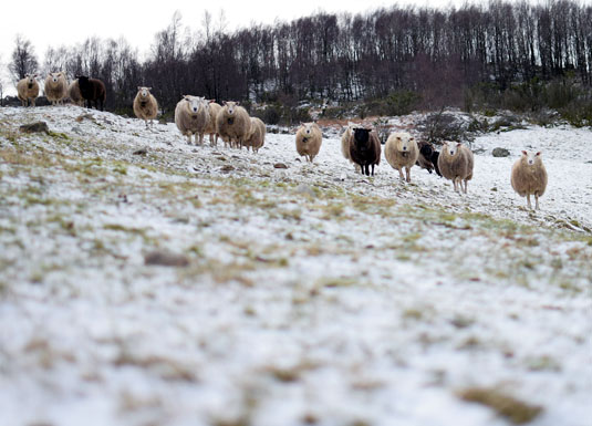 Dyr i vinterdrakt