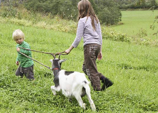 Barn og unge blir meir kjent med dyr og landbruk under Gøy på landet. Foto Åge Avedal
