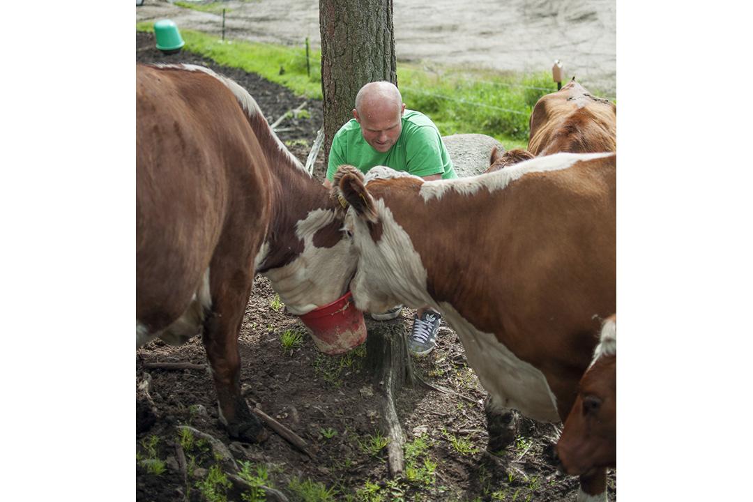 Skogsbeitet er like ved fjøset, og måler om lag 40 daa. Dyra veit godt kva det betyr når det kjem ei bøtte.