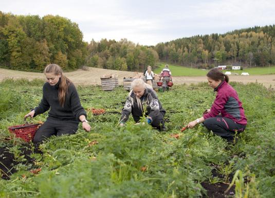 Ungdom søkjer landbruket