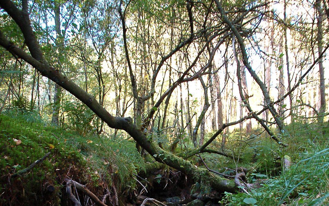 Tilbyr gavepakke til klimaskogplanting
