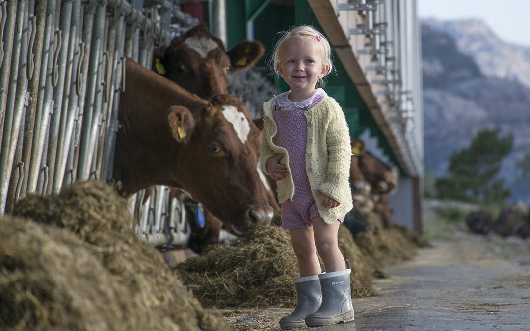 Sparer areal og tid med hydraulisk vippbart fôrbrett