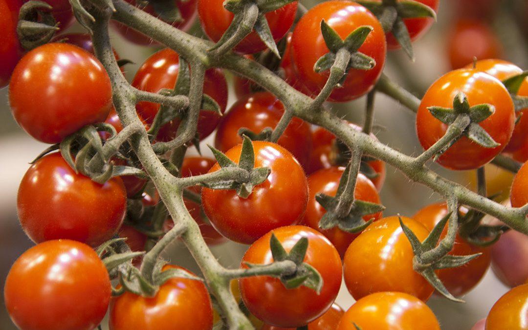 Gråvêr og import utfordrar grøntprodusentane