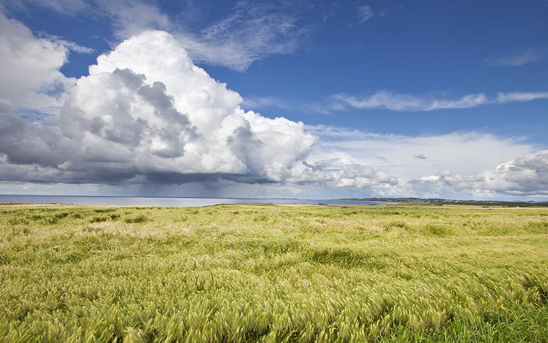 Kjøper korn av både Fk-Agri og Strand Unikorn
