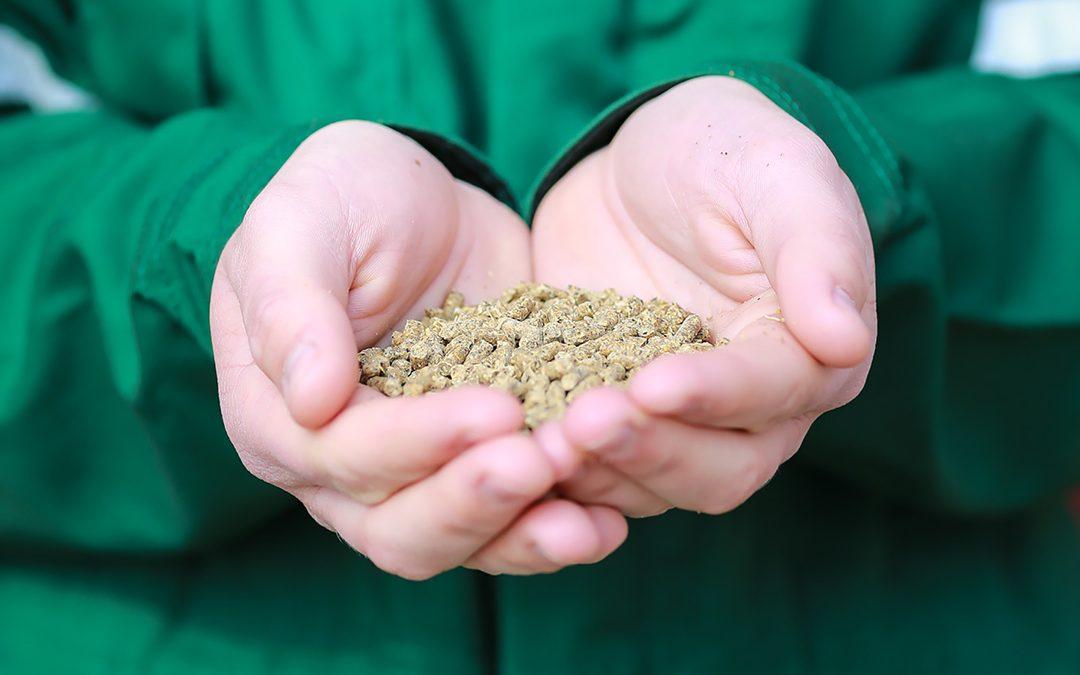 Forbetra kraftfôr til drøvtyggjarar