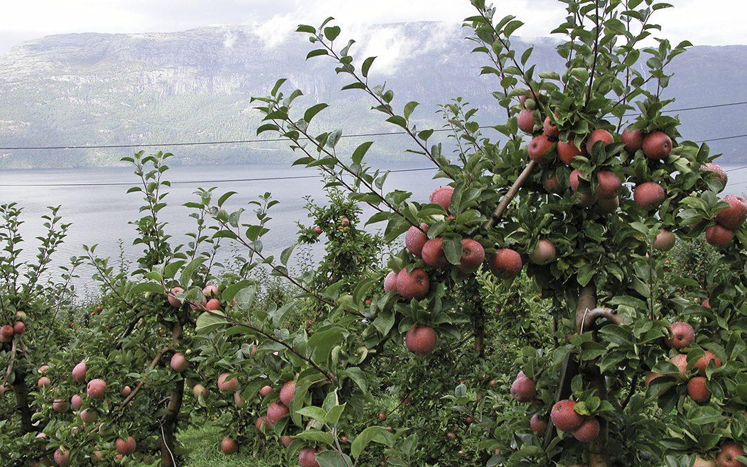 Karbonfangst i moderne eplehagar