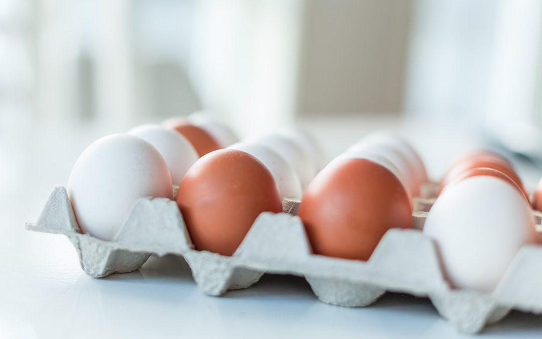 Eggeskallet: Superkrefter rett fra naturen