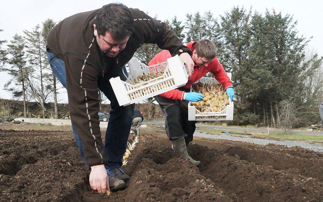 Fortsatt rom for økt potetproduksjon i Rogaland