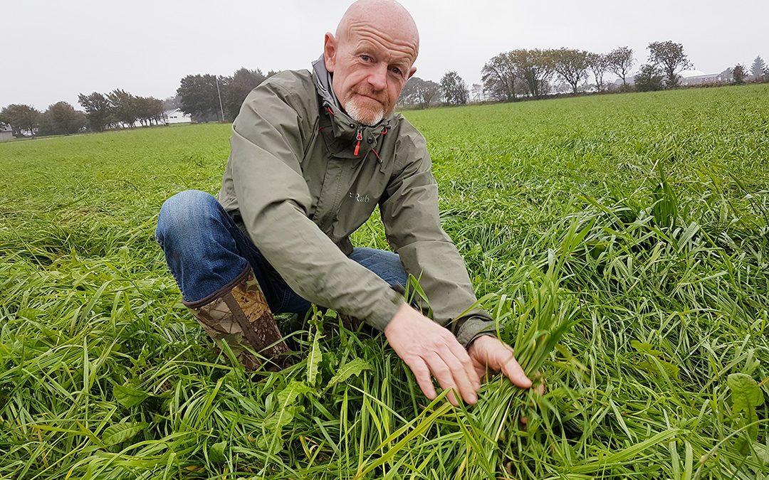Dyrkar gras utan glyfosat