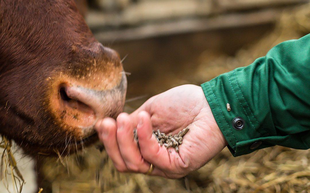 Optimering av kraftfôr til mjølkeku