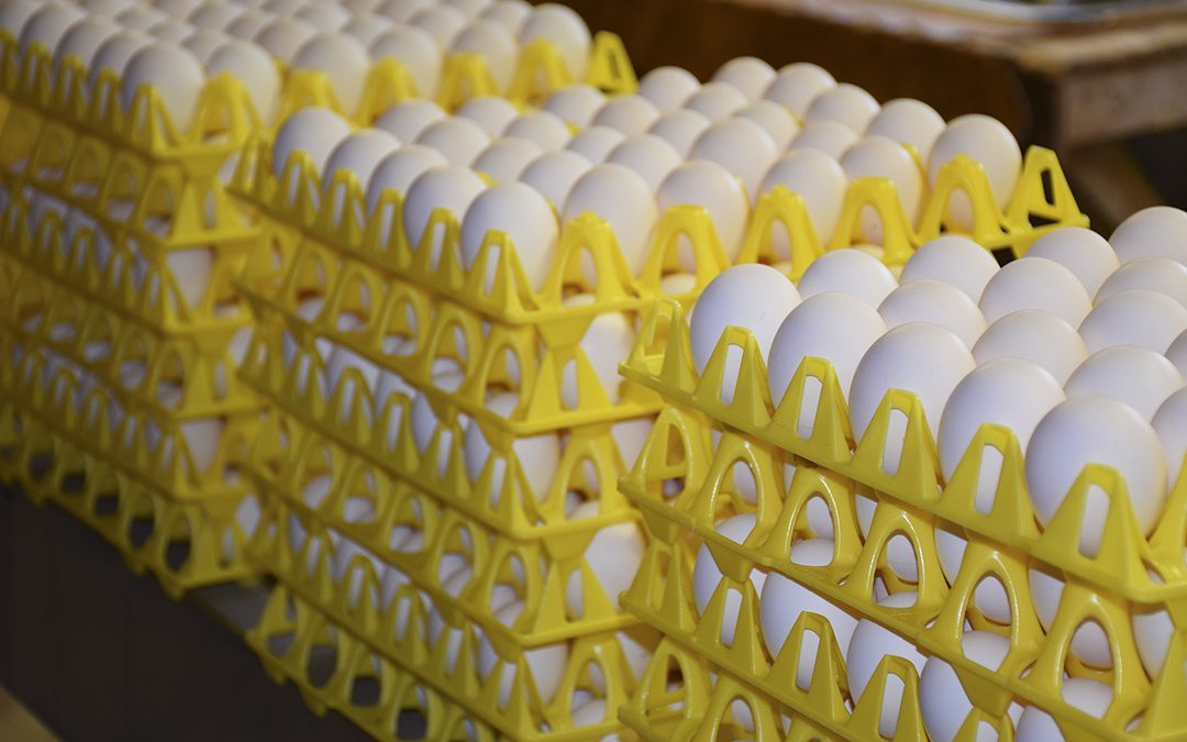 Varsko om overproduksjon av egg