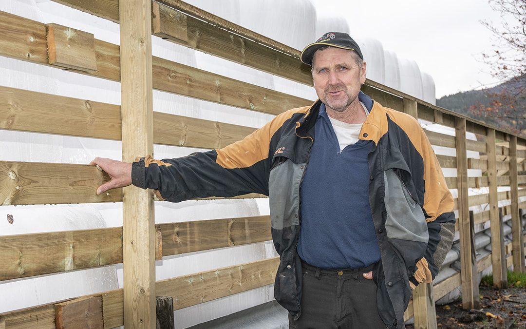 Hjorten utfordrar landbruket på Voss