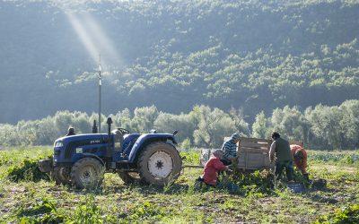 Mercy Farm – Styrka sjølvrespekt gjennom arbeid