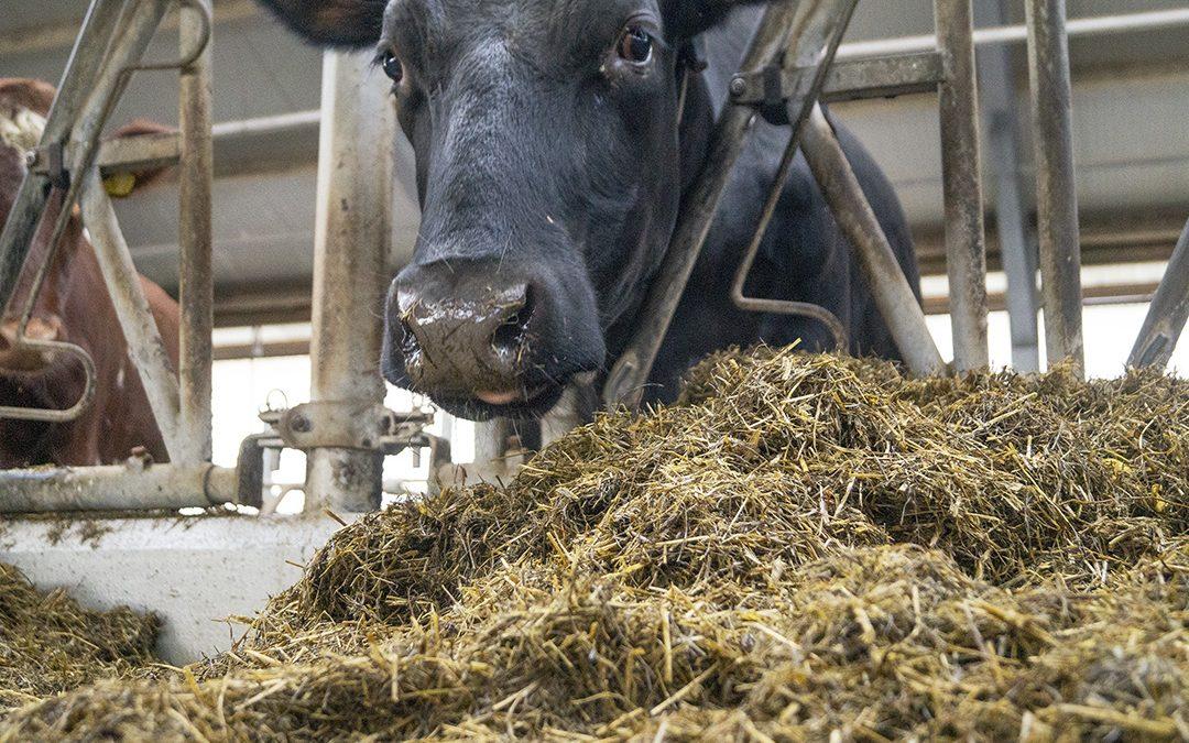 Fôrplanlegging med E-dairy