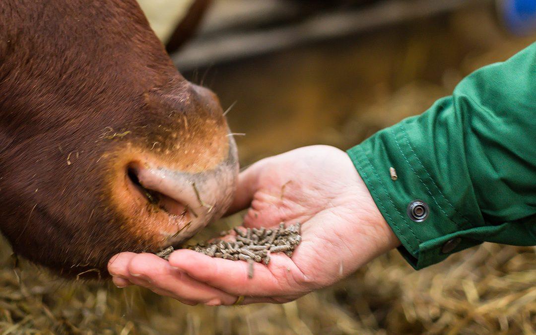 Fôring med lite grovfôr