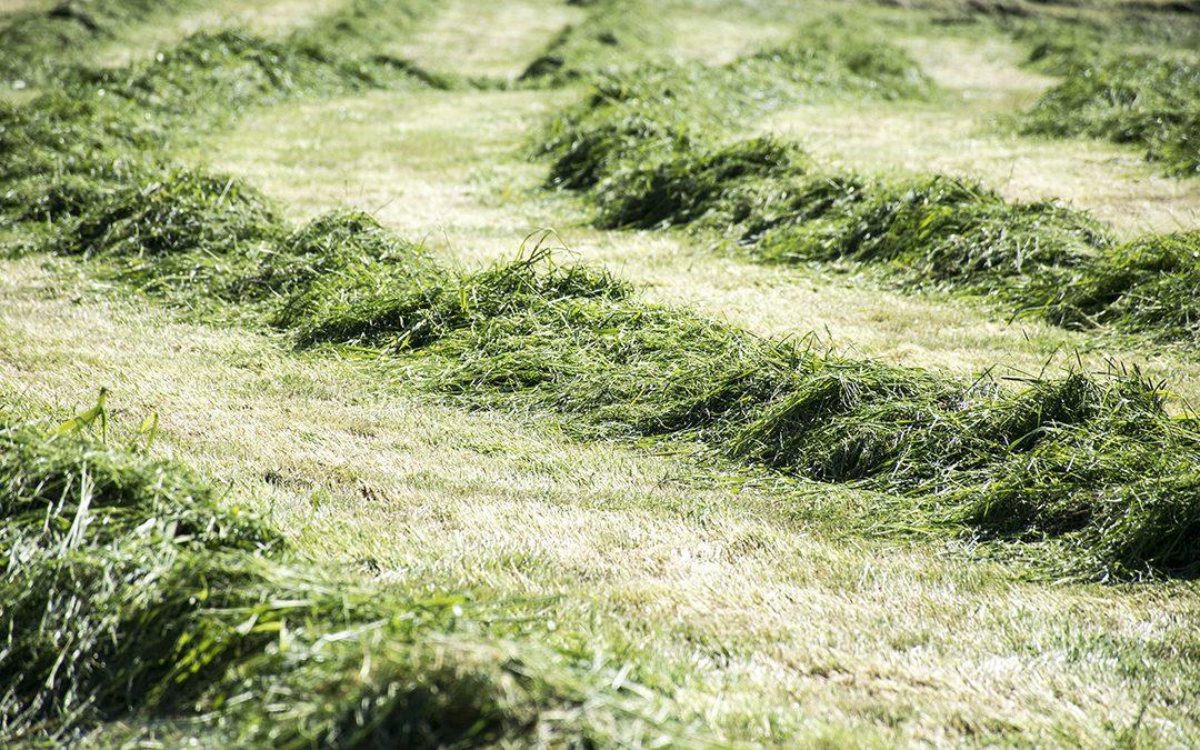 – Store mengder «soya» i norsk eng
