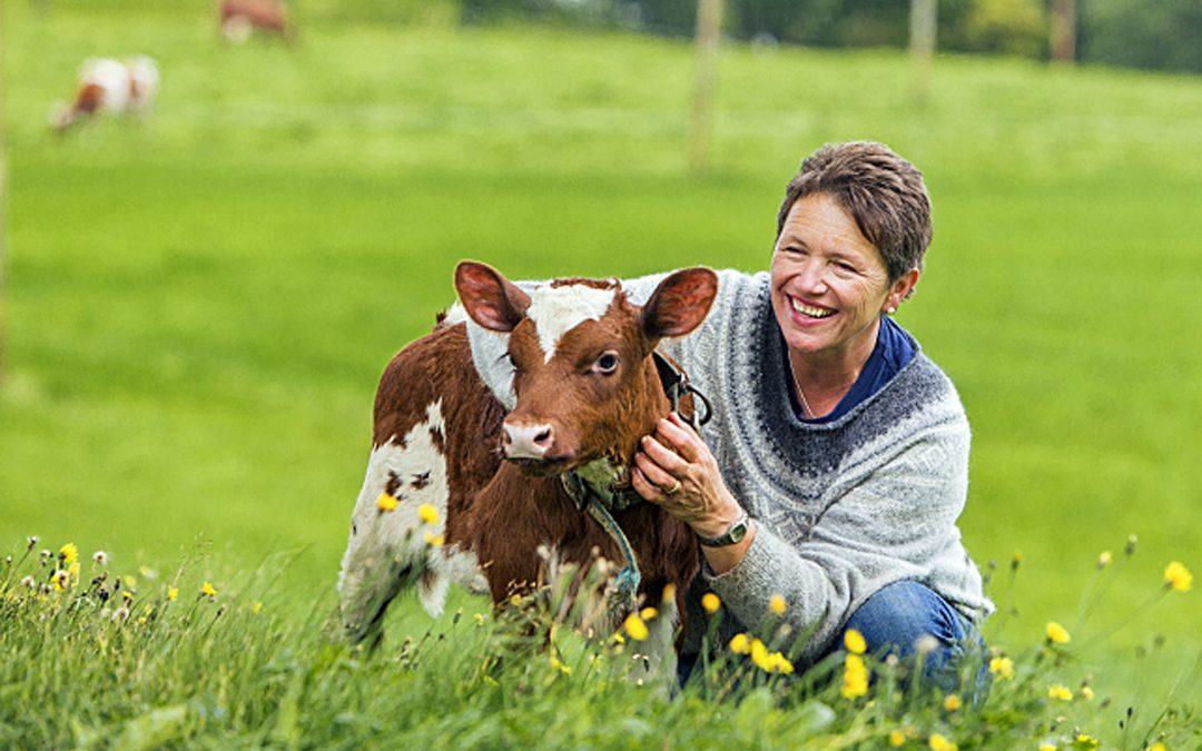 Framtidskua fôrar kalven sin sjølv