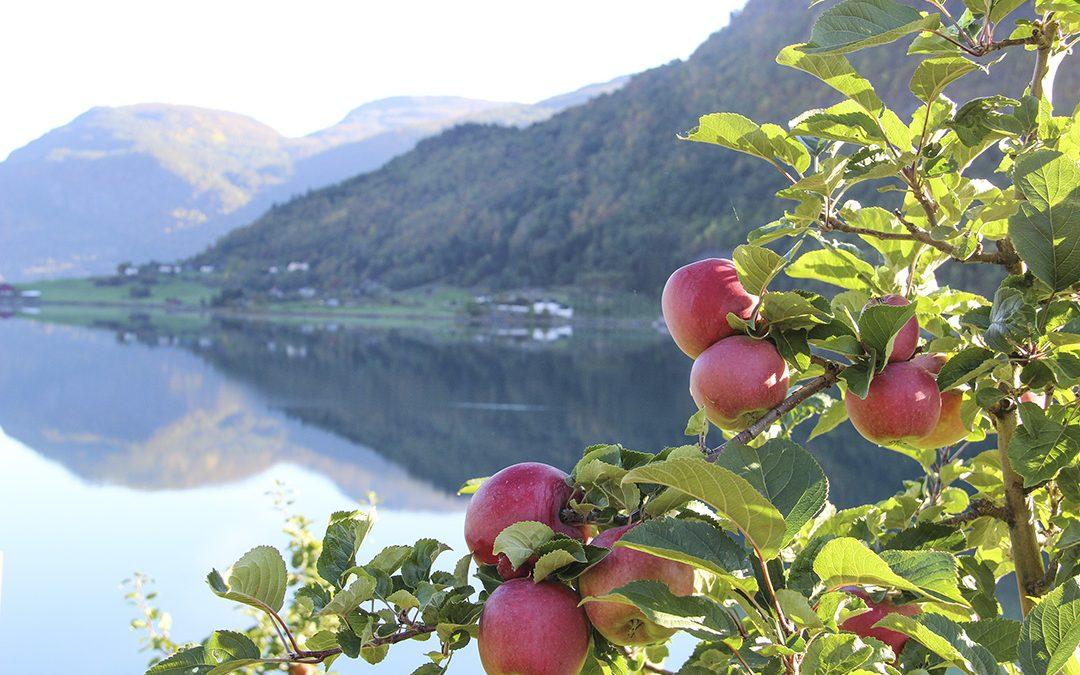 Også frukt og bær på kornjord