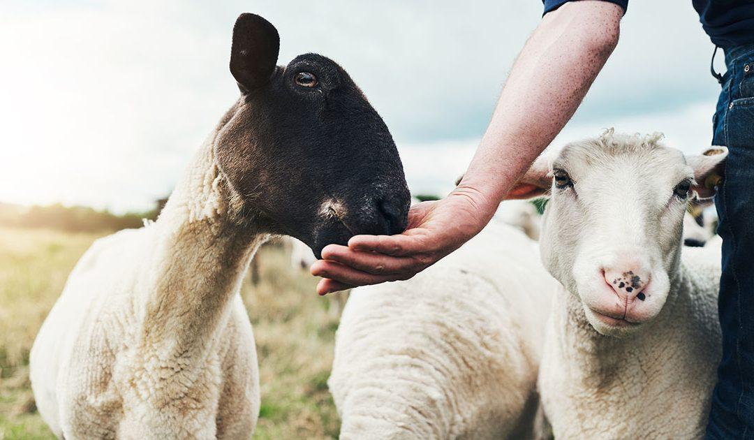 Bonden er den viktigste faktoren for dyrene