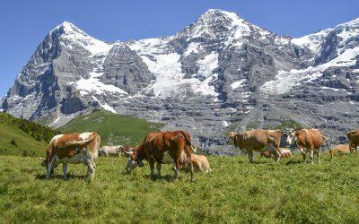 Vil vri politikken i retning Sveits