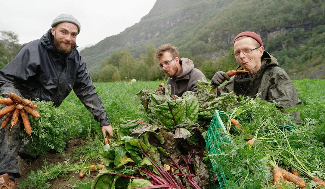 Rekordmange vil læra øko-landbruk