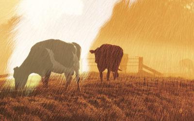 Et landbruk i endring