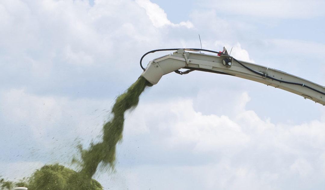Taper du pengar på grovfôret?