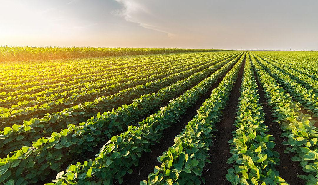 Animalsk protein som alternativ til soyamjøl