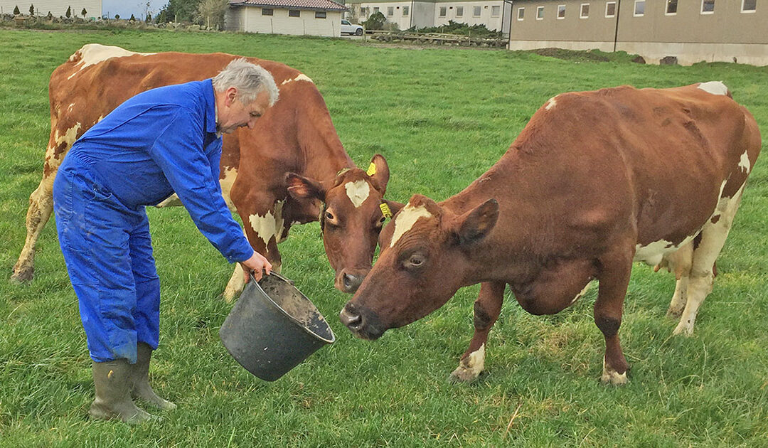 To gonger hundre tonn mjølk