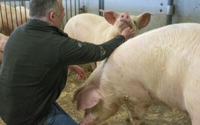 Tilbyr «griseprat» mot tilsynsnerver