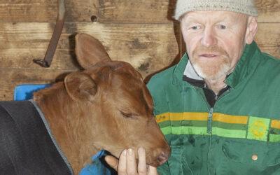 Kraftfôrprisen hindrar øko-satsing