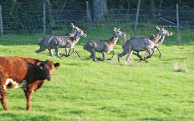 Hjortebestanden må ned