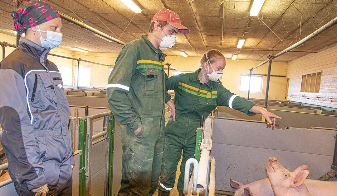 Har starta slaktegrisproduksjon i leigd grisehus