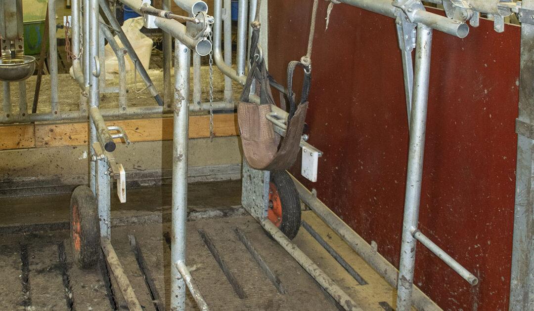 Livdyrhandel er risikofylt